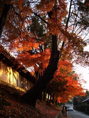 東福寺界隈(1)