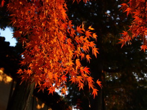 東福寺界隈(2)