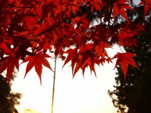 東福寺界隈(4)