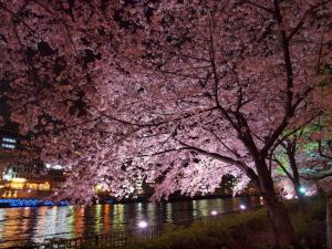 夜桜@南天満公園