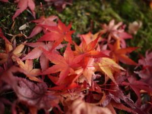落葉(Pana20mmで)