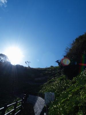 灘黒岩水仙郷(5)