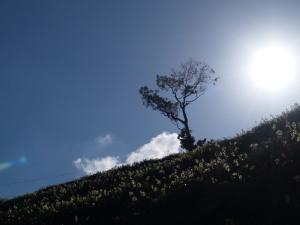 灘黒岩水仙郷(6)