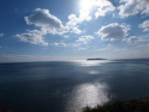 灘黒岩水仙郷(13)