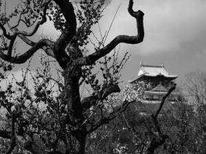 大阪城(6)